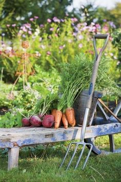 Outstanding Grow Like A Pro With These Organic Gardening Tips Ideas. All Time Best Grow Like A Pro With These Organic Gardening Tips Ideas. Country Farm, Country Life, Country Living, Organic Gardening, Gardening Tips, Vegetable Gardening, Farms Living, Down On The Farm, Organic Vegetables