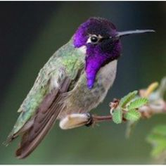 Top 5 Best Hummingbird Feeders - They're baaack! http://abirdsdelight.com/top-5-best-hummingbird-feeders #hummingbirds #abirdsdelight