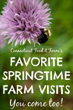 Connecticut Food & Farm has selected our Ten Favorite Springtime Farm Visits. You come, too!