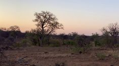 YouTube Honey Badger, All Inclusive Resorts, Safari, Africa, Country Roads, Explore, Sunset, Youtube, Photography