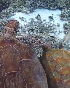 Naughty Turtle 😂🐢- Beautiful Animals