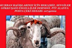 Devriye Haber : TÜM TURKİYE'DEKİ ENGEL TANIMAYAN ENGELSİZLER BAĞIŞ...