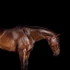 "169 Me gusta, 8 comentarios - Ramón Casares - Wellington, FL (@ramoncasares_photography) en Instagram: ""That special, kind yet powerful, beauty that horses have. #horsephotography #horses #horse…"""