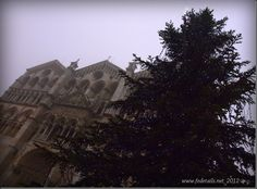 Cattedrale e albero di Natale, Ferrara, Emilia Romagna, Italia - Cathedral and Christmas tree, Ferrara, Emilia Romagna, Italy - Property and Copyrights of www.fedetails.net