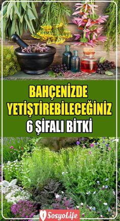 Gardening Tips, Landscape, Flowers, Plants, Tibet, Decor, Pump, Balconies, Garten