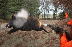 Top 10 Best Shots - Wild Boar Hunting,Chasse Au Sanglier