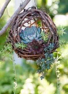 Grapevine Ball Basket for Succulents | simplysucculents.com #succulents #gardening