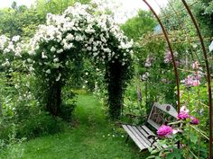 La Vie en Roses: Lykkefund - huumaavan hurmaava hunajaruusu