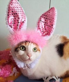 Look! It's the Easter...kitty?