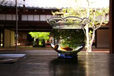 Fishbowl in summer