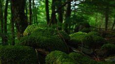 Лес, Деревья, Пена, Растительность