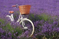 Pashly Britannia - My Dream Bicycle upon which I will toodle through the village and stuff the basket with books. Bicycle Pictures, Bike Wedding, Vintage Bicycles, Wicker Baskets, Traditional, Lady, Classic, Cycling, England