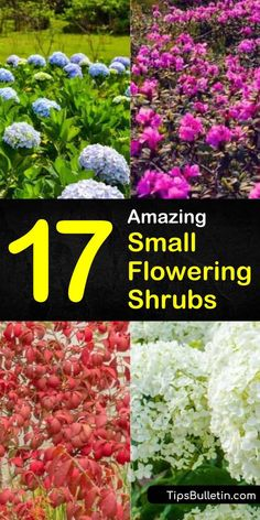 Find out which small flowering shrubs and hedges are right for front yards and backyards. In our guide, we give you tips on small shrubs that like full sun, do well near the house, and shade you every spring! Flowering Bushes Full Sun, Evergreen Flowering Shrubs, Full Sun Shrubs, Flowering Plants, Small Garden Shrubs, Shrubs For Landscaping, Landscaping Ideas, Farmhouse Landscaping, Dwarf Shrubs