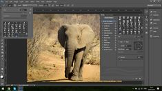 How To Add Drama To Your Wildlife Images In Photoshop – Part 2 #photography #phototips https://sleeklens.com/how-to-add-drama-to-your-wildlife-images-in-photoshop-part-2/