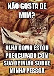 Shared by Catarina Aleluia. Animals And Pets, Funny Animals, Cat Memes, Funny Memes, Avakin Life, I Love Cats, Funny Cats, Comedy, Marvel