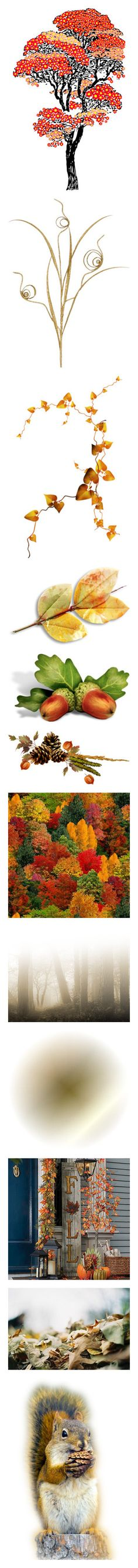 """AUTUMN'S GATHERING. ."" by julidrops ❤ liked on Polyvore featuring trees, flowers, fillers, plants, backgrounds, gold, nature, autumn, fall and leaves"