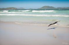 EDUARDO ABREU PHOTO STUDIO ® www.eduardoabreuphoto.com  Praia do Forte - Cabo Frio (RJ) #cabofrio  #forte #praiadoforte #dunas #rj #brazil