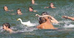 Dejen de realizar la fiesta del pato