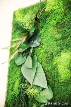 Green broadleaf moss and fern wall hanging in a reclaimed wood frame by Artisan Moss