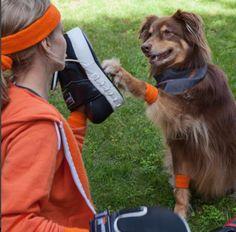 Pets de famosos que têm conta própria no Instagram Amanda Seifried, Star Wars, The Struts, Riding Helmets, Campaign, Meet, Canning, Instagram, Join