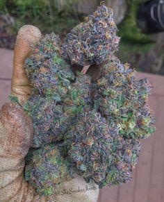 Follow us for the best daily marijuana / weed photos #marijuana #weed #420 #cannabis