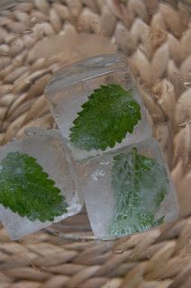 Summer is here and it's hot, hot, hot. For a cool and pretty summer drink: Freeze leaves of lemon balm in ice cubes for a wonderful additio. Fit Foods, Herb Recipes, Herb Gardening, Lemon Balm, Disney Food, Ice Cubes, Food Cravings, Summer Drinks, Herbal Remedies