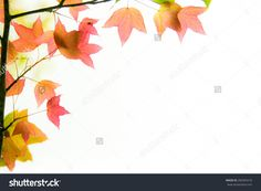 Fairly Soft Red Leaves With Soft Light Behide On White Background. Stock Photo 280583318 : Shutterstock