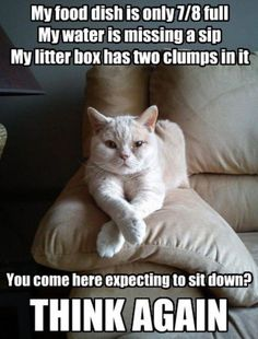 My cat is SO like this sometimes.....she loves to steal my chair from me!