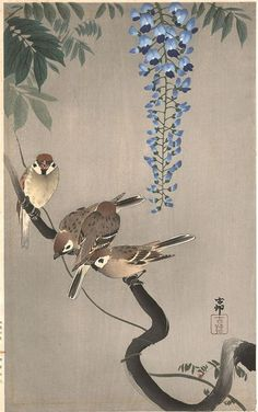Sparrows and Wisteria by Ohara Koson (or Shoson)