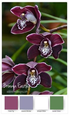 Here's the last instalment of colour swatches for orchids. I hope you will find them a useful reference when the new Stampin' Up! Climbing Orchid Bundle is released in June.