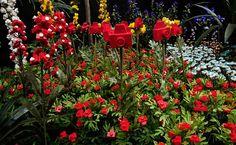 Jardineiro André Feliciano  Frutos do Jardim da Exposição Ecológica - MAM-SP 4  2010  fotografia  55,5 x 90 cm