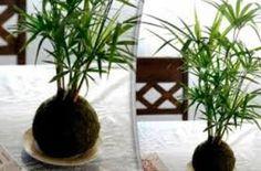 Decoraci n luz en casa jard n vertical for Utilisima decoracion de interiores