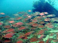 dive sites of the florida keys