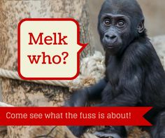 CLICK HERE TO PURCHASE Melk, The Christmas Monkey Book CLICK HERE TO PURCHASE MELK MONKEYS What Families are Saying About Melk: Melk, the Christmas Monkey has helped my autistic daughter understand more about the Bible and keeping Christ at the heart of Christmas. Because she's non-verbal, visuals and aids help her understand and learn. Having a friendly …