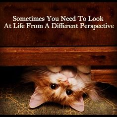 Positive cute quotes sayings perspective - Collection Of Inspiring Quotes, Sayings, Images I Love Cats, Crazy Cats, Cute Cats, Funny Cats, Funny Animals, Cute Animals, It's Funny, Funny Humor, Funny Cat Videos