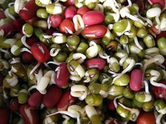 Sprouting 101: How to Sprout Everything from Adzuki to Lentils - organicauthority.com - Organic Living