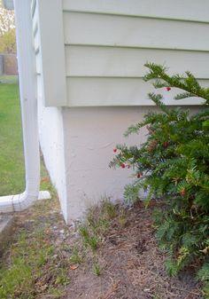 New Basement Wall Concrete Patch