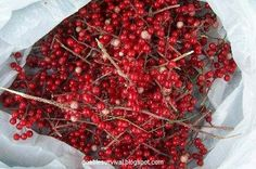 False Solomon's Seal berries (yum)