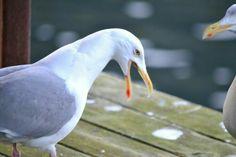 . Bird, Animals, Profile, Animales, Animaux, Birds, Animal, Animais, Dieren