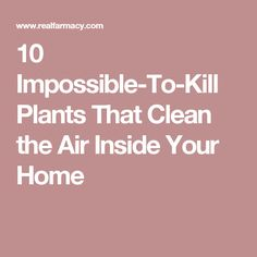 10 Impossible-To-Kill Plants That Clean the Air Inside Your Home