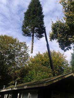 De bomen groeien (weer) tot in de hemel!