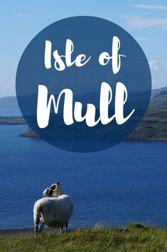 Visiting the Isle of Mull: Wildly Beautiful and Completely Underrated // Travel in Scotland's Inner Hebrides