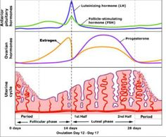 Lengthen your luteal phase. Progesterone  deficiency: LPD