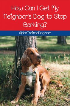 Is the pup next door so loud that you're wondering how to get your neighbor's dog to stop barking? Check out these 7 tips for some peace and quiet! Alpha Dog Training, Best Dog Training, Cute Dog Collars, Cool Dog Houses, Japanese Dogs, Dog Whistle, Dog Grooming Business, Military Dogs, Dog Barking