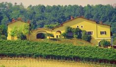 The winery Broglia Tenuta La Meirana, a great producer of Gavi
