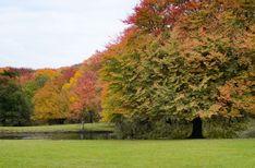 #autmn #colorful #foilage #nature #park #trees