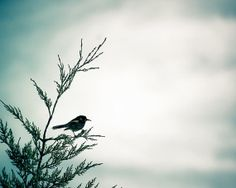 bird photography winter nature photography fine by mylittlepixels