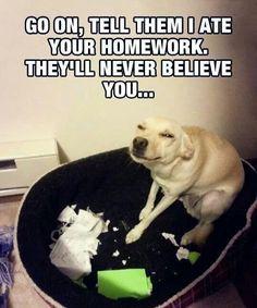 Dog eating homework