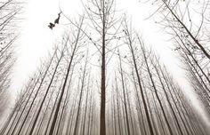 Tree farm in India