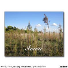 Weeds, Trees, and Sky Iowa Postcard